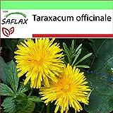 SAFLAX - Diente de león - 200 semillas - Taraxacum officinale