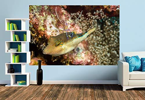 Premium Foto-Tapete Pederson Putzergarnele (versch. Größen) (Size M | 279 x 186 cm) Design-Tapete, Wand-Tapete, Wand-Dekoration, Photo-Tapete, Markenqualität von ERFURT