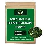 30 Fresh Sea Grape Leaves, All Natural, BayGrape Coccoloba Uvifera South Florida