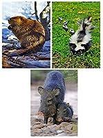 Beaver, Skunk & Javelina - 3 Lenticular 3D Postcard Greeting Cards [並行輸入品]