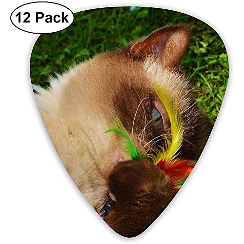Gato, Británico de Pelo Corto, Jugar, Mieze, Thoroughbred, Querido (paquete de 12)