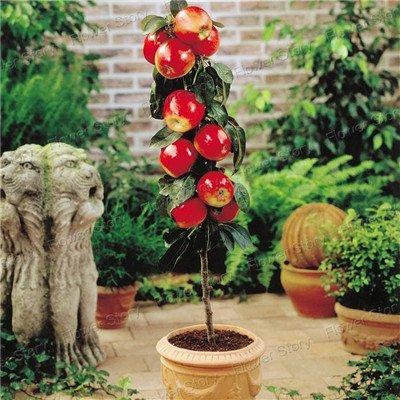 3590 Graines de légumes Fruit Flower DIY jardin non-OGM Survival New récolte Graines 30 différents types pacakge