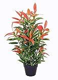 yanka-style PHOTINIA - Espátula Brillante con Maceta (Aprox. Planta Artificial de 80 cm de Alto, árbol Artificial, árbol, árboles, Flores, decoración, Regalo (Photinia)