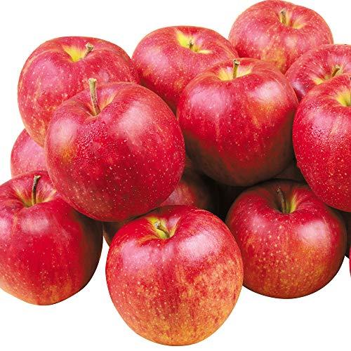 国華園 りんご 山形産 ジョナゴールド 10kg ご家庭用 林檎