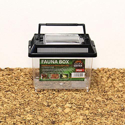 Terra Exotica Fauna Box - Mini 18 x 11 x 14 cm