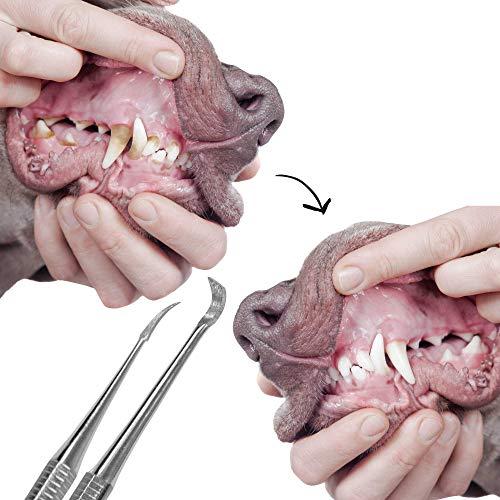 Schecker Zahnsteinentferner Set für Hunde und Katzen - 2 teiliges Zahnreiniger Set - mit Zahnsteinkratzer