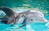 Puzzle 1000 Piezas Delfín Madre E Hijo para Adolescentes Y Adultos El...