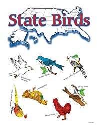 State Birds Bulletin Board Set
