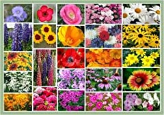 Non-GMO Bulk Northeast Wildflower Seed Mix 25 Species of Wildflower Seeds Fortified with Mycorrhizae, Beneficial Bacteria & Trichoderma for Easy, Superior, Organic Growing! A classic and easy to grow wildflower mix! Prefers full sun exposure; Special...