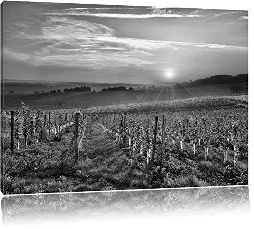 Wijngaard in Bergerac FrankrijkFoto Canvas   Maat: 120x80 cm   Wanddecoraties   Kunstdruk   Volledig gemonteerd