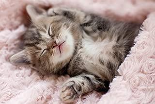 GB Eye Limited Cute Cuddly Grey Kitten Sleeping Napping Cool Wall Decor Art Print Poster 36x24