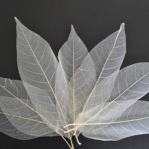 SPDD 100pcs Natural Magnolia Skeleton Leaf,Magnolia Leaf Dried Leaves Samples for Card Scrapbook...