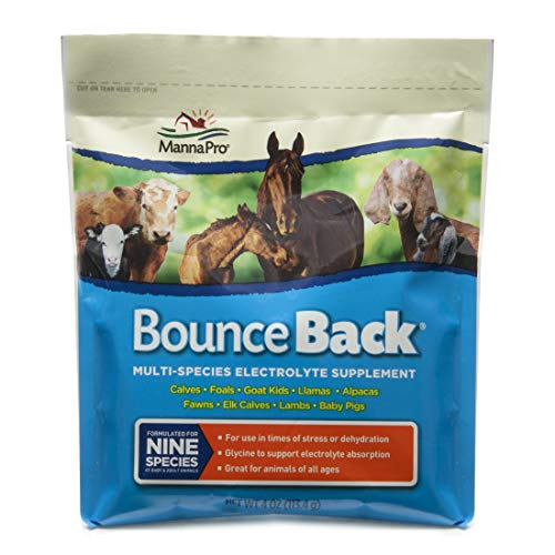 Manna Pro Bounce Back Electrolyte Supplement for Horses | Formulated with Electrolytes | Helps Relieve Stress and Dehydration | 4oz