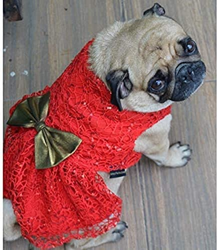 Kitty & The Woof Gang Red Spider Net Dress for Dog, Cat and Puppies   Ideal for Wedding and Parties   Please Check Th...