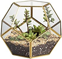 NCYP Gold Glass Geometric Terrarium, Home Tabletop Decor, Pentagon Regular Brass Planter for Succulent Fern Moss Air...