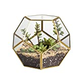 NCYP Gold Glass Geometric Terrarium, Home Tabletop Decor, Pentagon Regular Brass Planter for Succulent Fern Moss Air Plants, Miniature Fairy Garden Container Gift (No Plants Included)