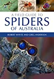 Insect And Spider Field Guides