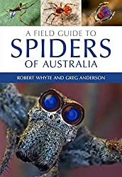 , What Is The Huntsman Spider? How Big Is It and Does It Bite?, Science ABC, Science ABC