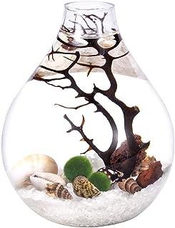 Teardrop Terrarium Mairmo kit- Natrual Gravels with Living Moss Ball, Sea Fan and Shells, Unique Mini Aquarium