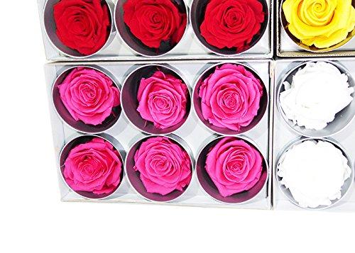 Loisirs créatifs RST/249G Tète de Rose, Fleur, Fuchsia, 5 x 5 x 5 cm