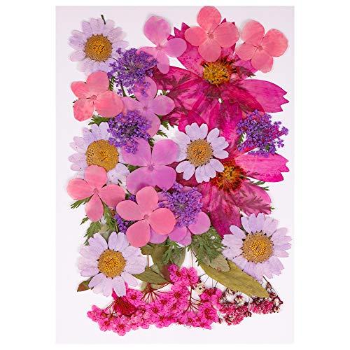 Heyu-Lotus Fleurs Pressées Séchées Naturelles Mélangées, Fleurs Séchées Multiples pour Bricolage Bougie Résine Bijoux Ongles Art Décorations Florales Décors(Violet)