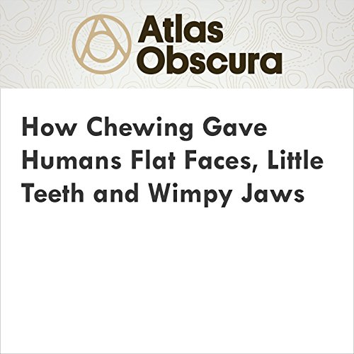 How Chewing Gave Humans Flat Faces, Little Teeth and Wimpy Jaws audiobook cover art