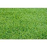 1/2 lb. Perennial Ryegrass Lawn Pasture Wildlife Grass Seeds