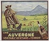 Auvergne Gentiane Poster, Reproduktion, Format 50 x 70 cm,