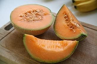 Minnesota Midget Melon - 100 Seeds - GARDEN FRESH PACK!