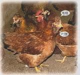 大分県産 おおいた冠地どり 丸鶏(中抜き) 2kg前後 x3
