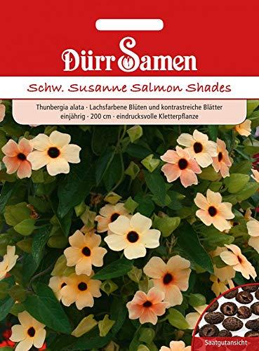 Dürr Samen 4213 Schwarzäugige Susanne Salmon Shades (Schwarzäugige Susanne Samen)