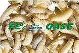 40 Stück Bienenmaden Wachsraupen Wachsmaden Angelköder Köder Futtertiere