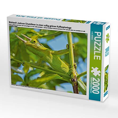 CALVENDO Puzzle Mahlzeit! Jackson Chamäleon in Einer saftig grünen Kaffeeplantage 2000 Teile Lege-Größe 90 x 67 cm Foto-Puzzle Bild Verlag