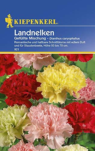 Dianthus Landnelken Gefüllte Mischung...