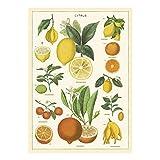 Cavallini Papers & Co. Inc, Citrus Wrap, 20x28 inches
