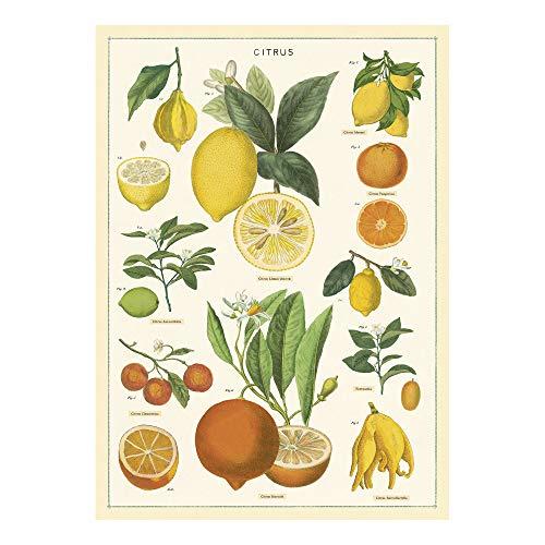 Cavallini Papers & Co. Inc, Citrus Wrap, 20x28 inches (WRAP/Citrus)