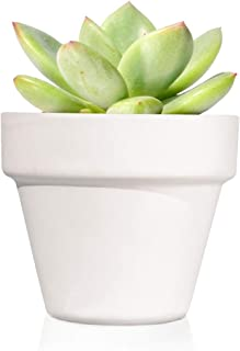 Pack de 12 plantas suculentas echeveria Thank You - Detalles boda para invitados - Obsequios para bautizo o comunión