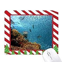 海水魚珊瑚科学は自然の写真 ゴムクリスマスキャンディマウスパッド