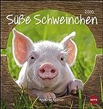 Schweinchen Postkartenkalender. Postkartenkalender 2020. Monatskalendarium. Spiralbindung. Format 16 x 17 cm