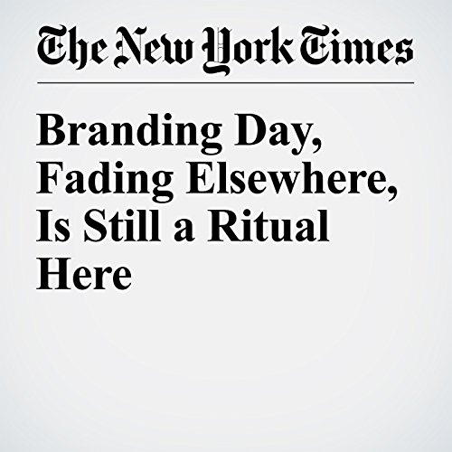 Branding Day, Fading Elsewhere, Is Still a Ritual Here cover art