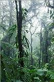 Poster 61 x 91 cm: Costa Rica - Regenwald von Matteo