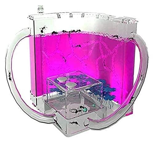 ZOUJIANGTAO Ameisenfarm Ameisennest Haus Habitat Spielzeug Erziehungswissenschaft Geschenk für Jungen Mädchen Einfach für Kinder zu Installieren (Color : Purple, Size : 11.5x11.5x11.5cm)