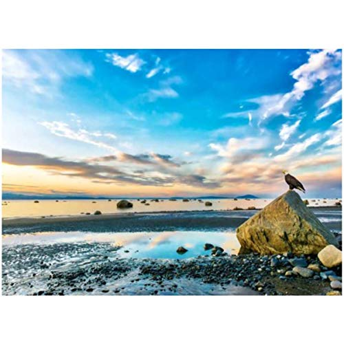 DIY Paint by Numbers Bald Eagle Watching a Stunning Sunset on The Cook Inlet in Alaska for Adults Kids Beginners Painter Colorful Oil Paintings Gift Kit with Paintbrushes 16x20inch