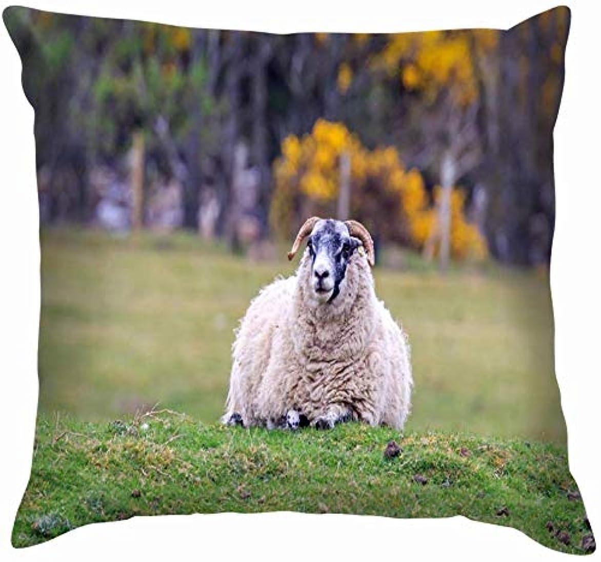 学期表向きエキサイティングスコットランドブラックフェイス羊立っている牧草地動物野生生物農業自然投げる枕カバーホームソファクッションカバー枕カバーギフト45x45 cm