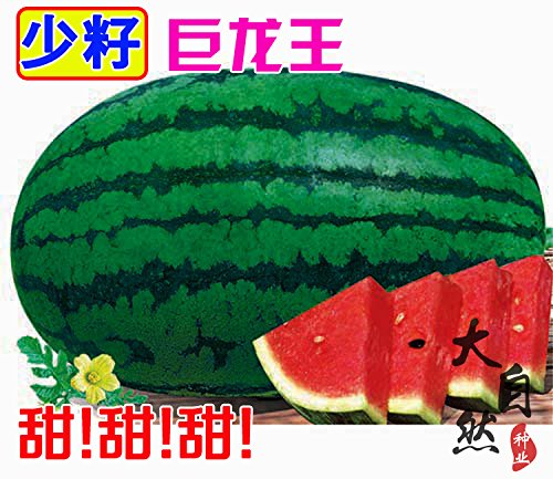 graines de melon d'eau géantes, les graines de melon balcon graines de fleurs bonsaï sont très faciles à cultiver l'usine d'emballage d'origine graines
