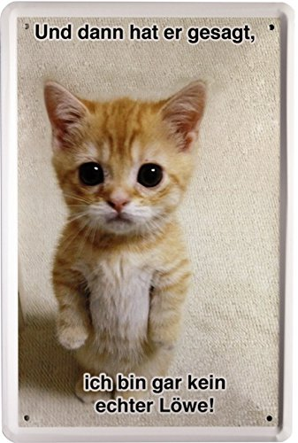 Blechschild 1251 Plaque en tôle Petit chat Style publicité rétro Avec inscription 20 x 30 cm [en langue étrangère]