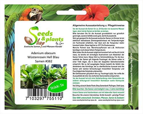 Stk - 5x Adenium obesum Wüstenrosen Hell Blau Pflanzen - Samen #382 - Seeds Plants Shop Samenbank Pfullingen Patrik Ipsa