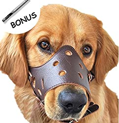 Leather Muzzle on golden retriever