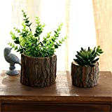 maceta de madera con corteza natural de sauce cactus pequeño maceta de registro suculento decorativa maceta rústica artesanal hecha a mano contenedor - grande