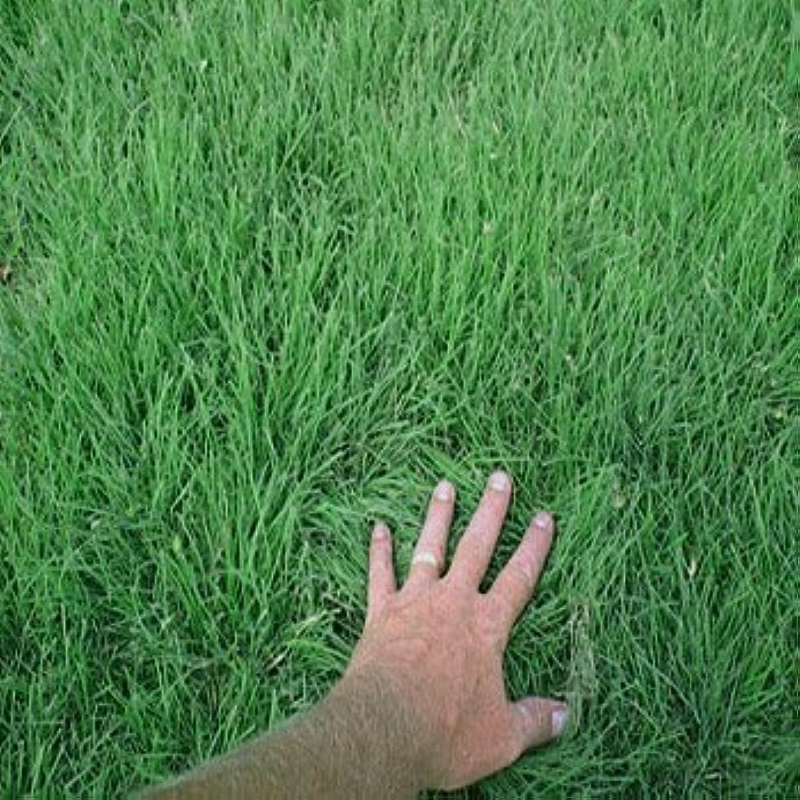 Outsidepride Drought Tolerant Buffalo Lawn Grass Seed - 2 LB